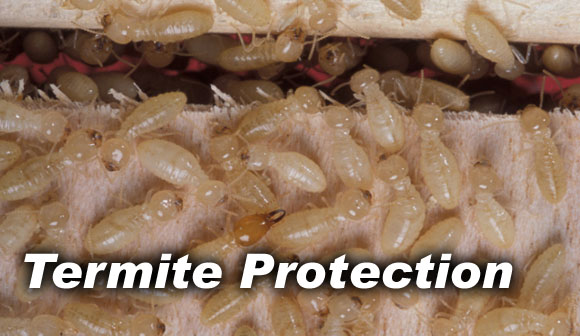 Action Pest Control of Fort Mill - Termite Protection