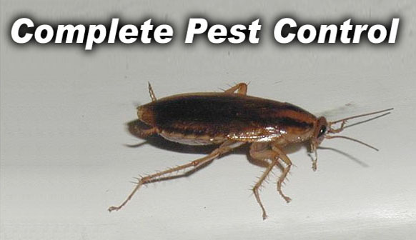 Action Pest Control of Fort Mill - Complete Pest Control