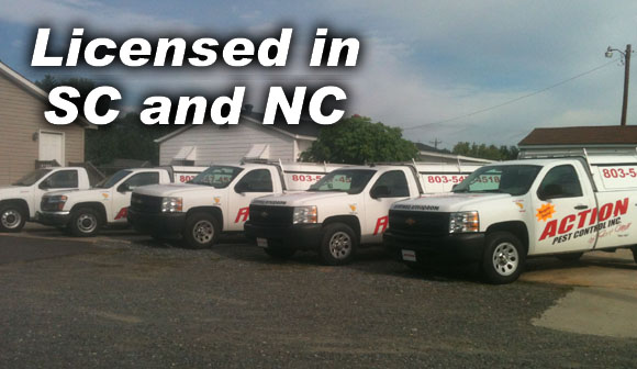 Action Pest Control of Fort Mill - Licensed in South Carolina and North Carolina